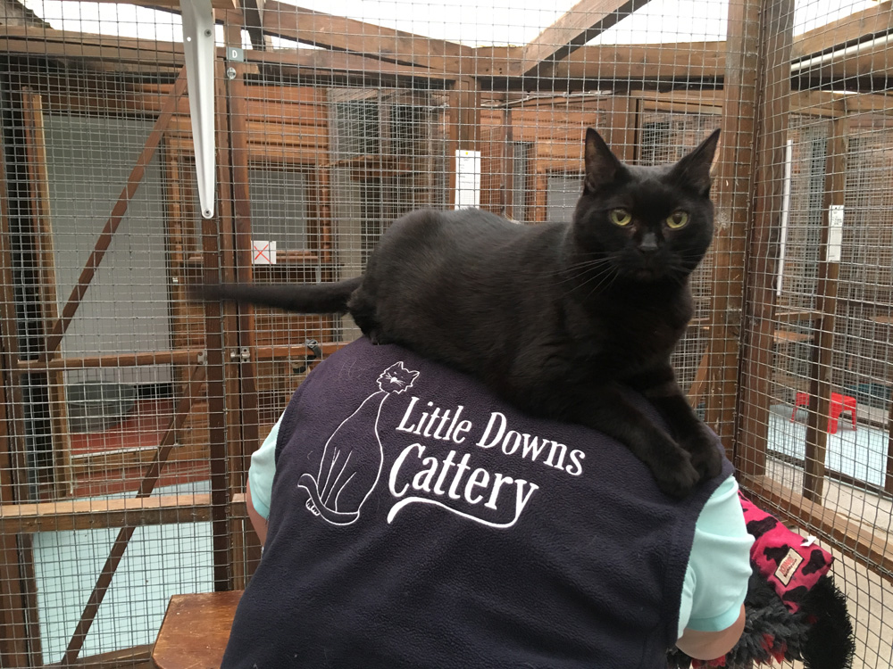 Cattery Care
