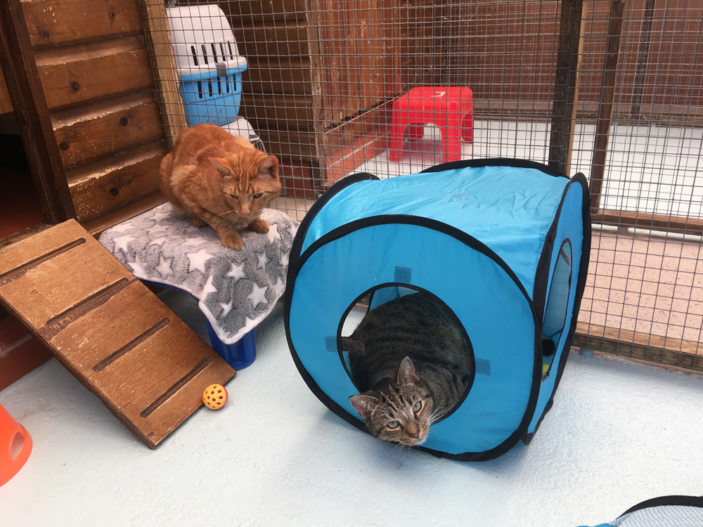 Minehead and Taunton Cattery